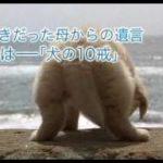 映画「犬と私の10の約束」予告編 (高画質版)