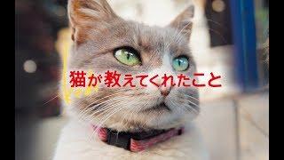 【感動】映画『猫が教えてくれたこと』予告編