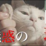 ドラマ版「猫侍 SEASON2」第3話予告