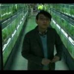 『冷たい熱帯魚』日本版予告(avi)