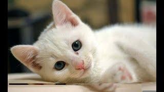【感動】白猫のミーコ 【泣ける話】